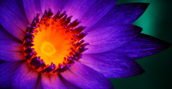 Sean Ward | Photo Gallery | Flowers and Other Small Things