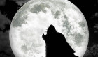 coyote howls under a full moon